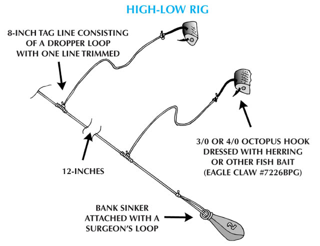 Sea Bass - High-Low Rig