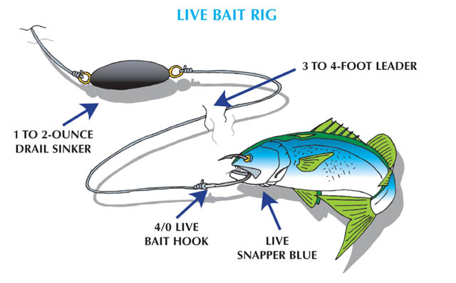 Weakfish - Live Bait Rig