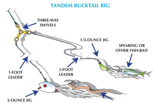 Weakfish - Tandem Bucktail Rig